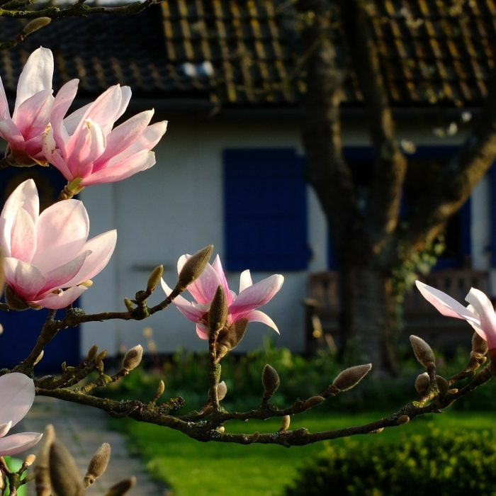 Magnolia 193604 1920